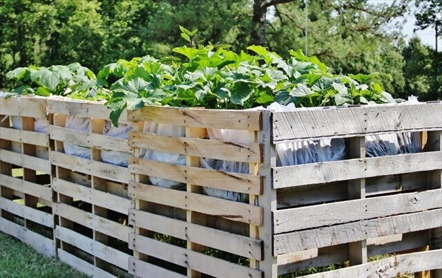Pallet Vegetables Garden and Fence Safety 99 Pallets