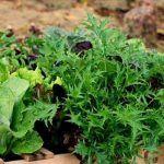 DIY Pallet Gardening