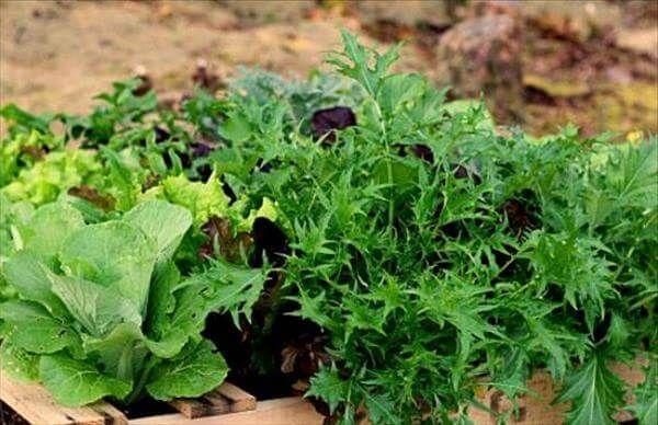 diy pallet gardening tutorial