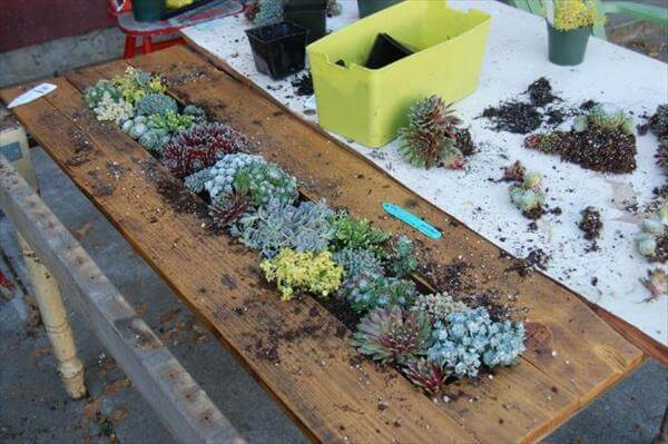 Pallet Succulent Table