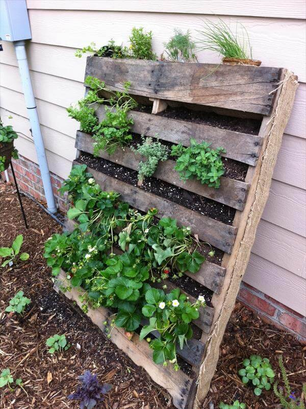 Diy vertical pallet vegetable garden 99 pallets for Vertical pallet garden