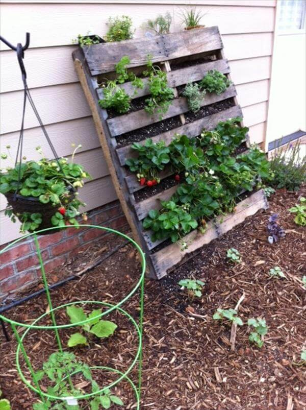 Diy vertical pallet vegetable garden 99 pallets for Pallet veggie garden