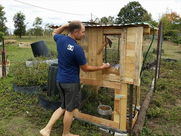 diy pallet chicken coop
