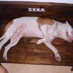 DIY Pallet Dog Bed – Make your Dog Relaxed