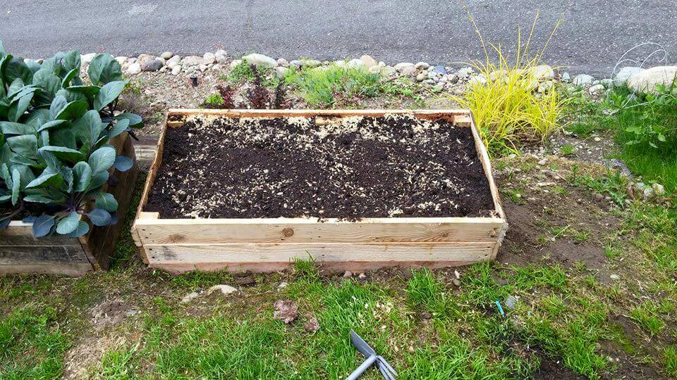 recycled pallet raised garden beds