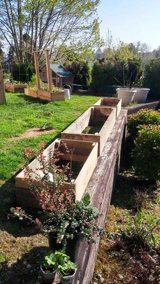 upcycled pallet raised flower beds