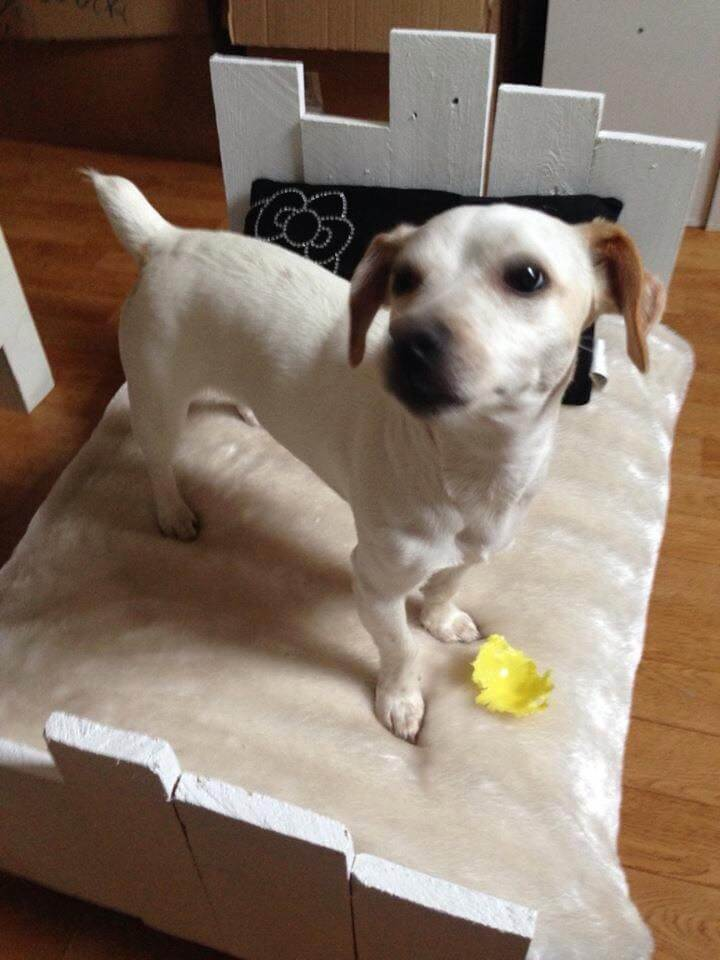 wooden pallet dog with cushion