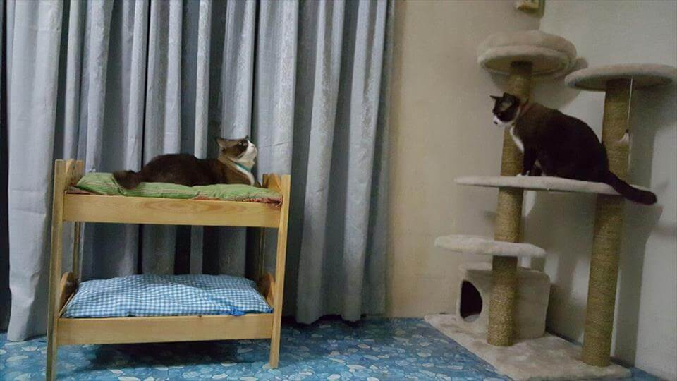 low-cost wooden pallet bunk cat bed