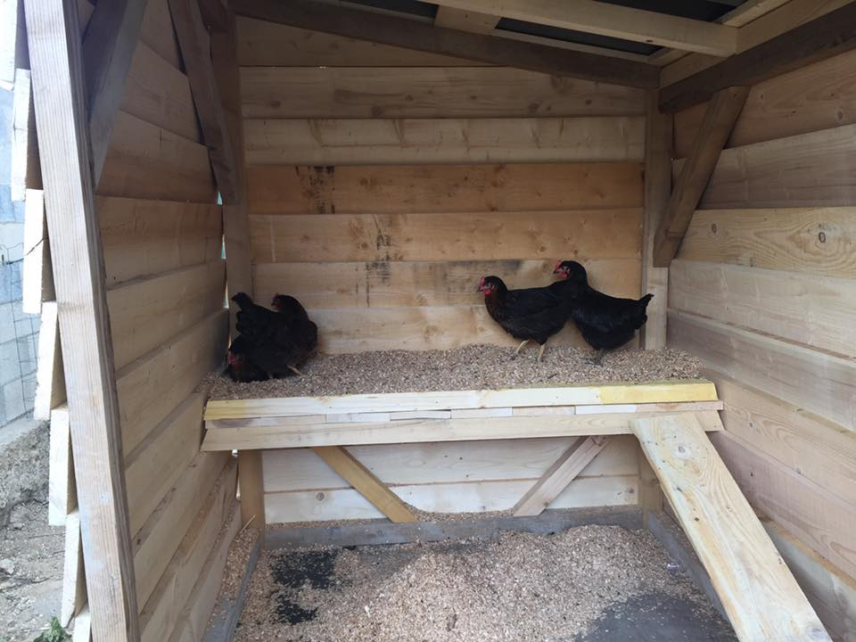 Pallet chicken coop easy to do with pallets 99 pallets Chicken coop from pallet wood