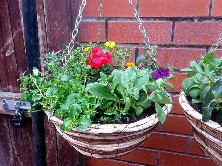 flower hanging round basket